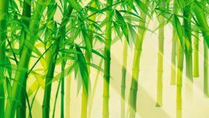 MS459 - Từ bài thơ Tre Việt Nam hãy viết một bài văn về cây tre trong cuộc sống