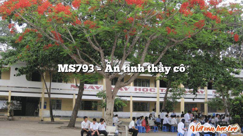 MS793 – Ân tình thầy cô