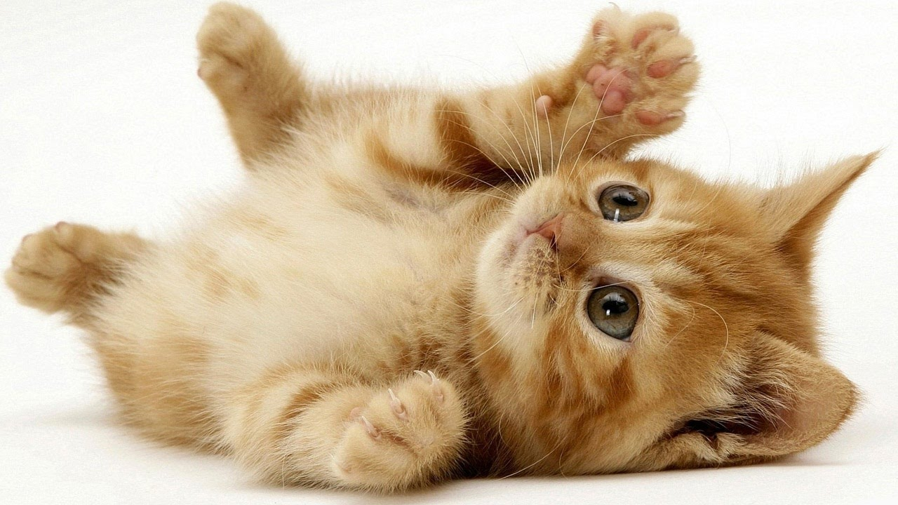 unnamed file 232 - Biểu cảm về con vật nuôi (con Mèo)